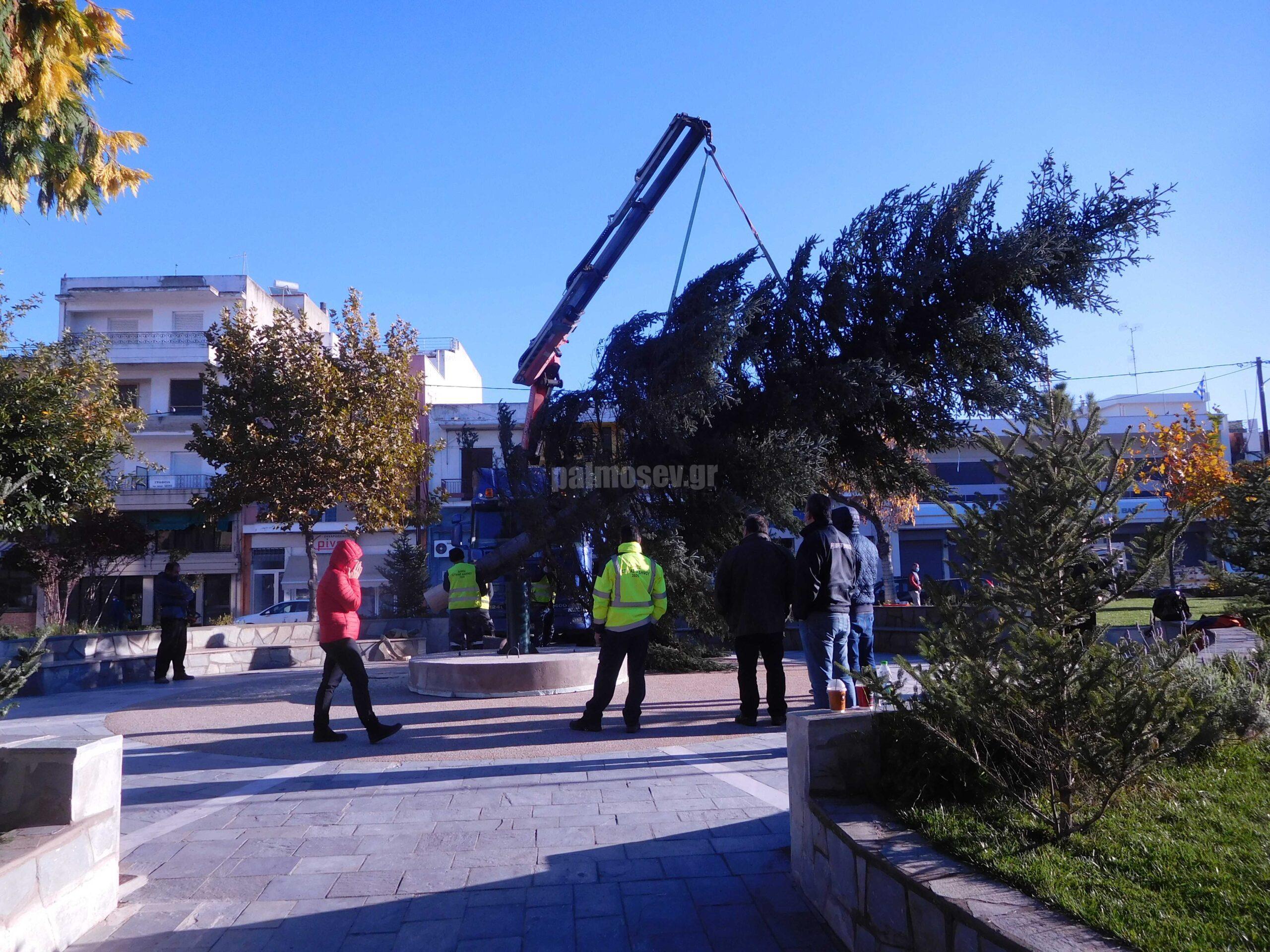 Το στήσιμο του Χριστουγεννιάτικου δέντρου στην πλατεία Ιστιαίας σε εποχές καραντίνας