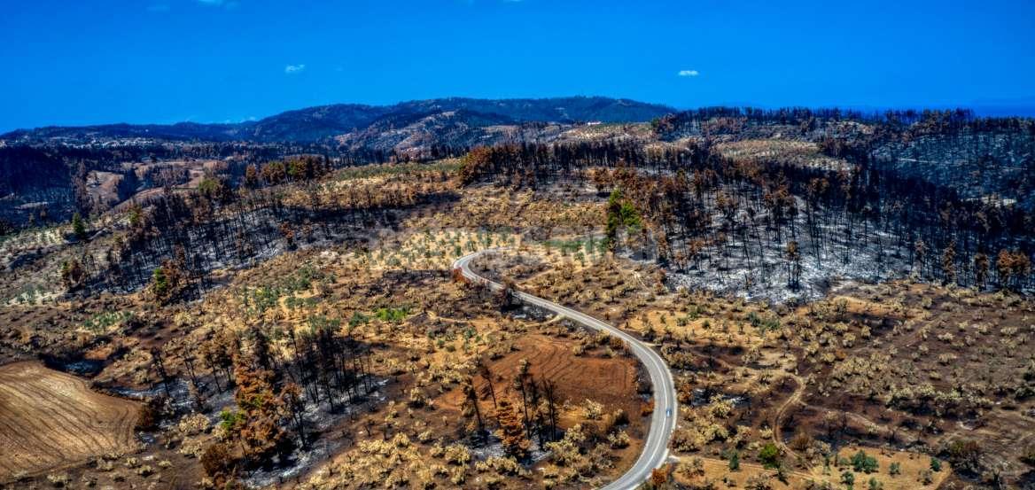 Διευρυμένο Πλέγμα Στήριξης Ρητινοκαλλιεργητών Πυρόπληκτων Περιοχών